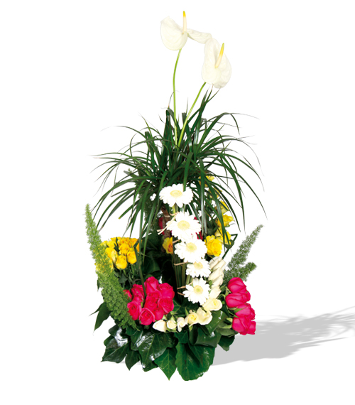 Livraison de fleurs deluxe mafleur ma maroc for Livraison fleurs etranger