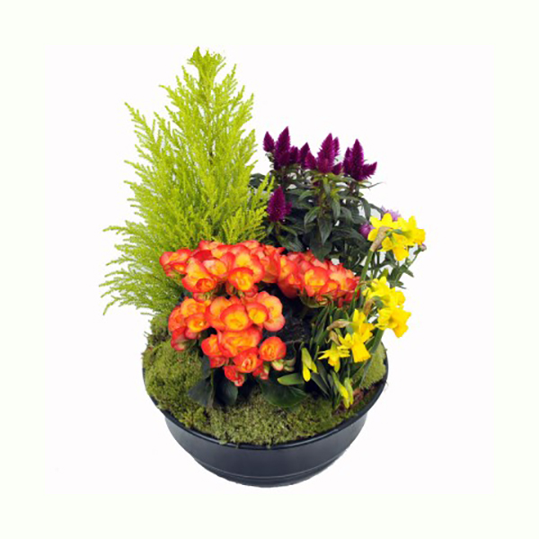 livraison de fleurs composition de plantes mafleur ma maroc. Black Bedroom Furniture Sets. Home Design Ideas