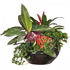 fete des peres maroc livraison de fleurs par mafleur ma. Black Bedroom Furniture Sets. Home Design Ideas