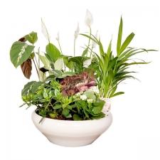 composition plante interieur. Black Bedroom Furniture Sets. Home Design Ideas