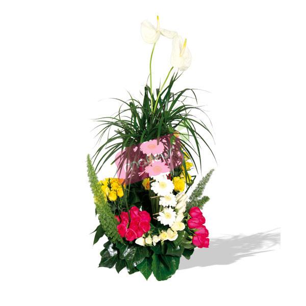 Livraison de fleurs deluxe mafleur ma maroc for Livraison de fleurs demain