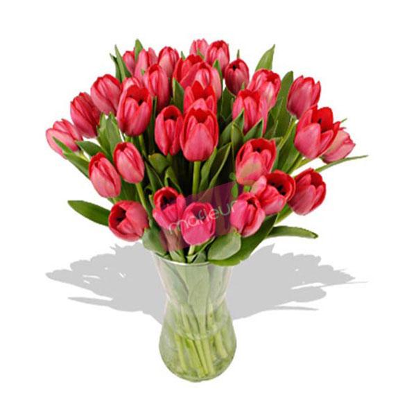Livraison de fleurs tulipes rouges mafleur ma maroc for Livraison tulipes