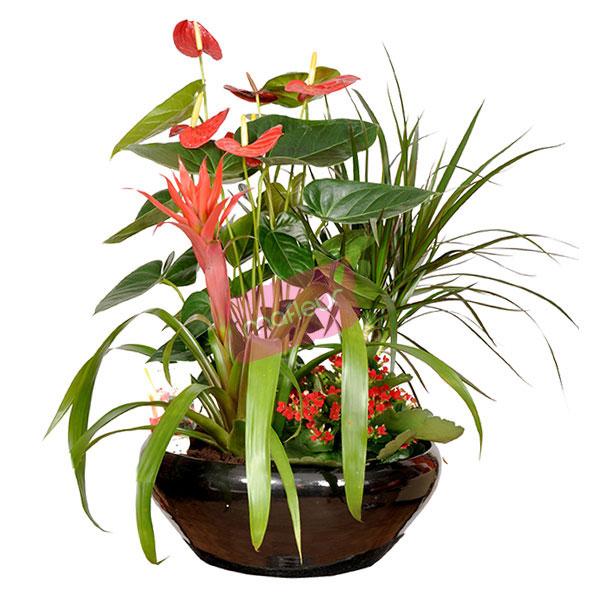 livraison de fleurs composition rouge noir mafleur ma maroc. Black Bedroom Furniture Sets. Home Design Ideas