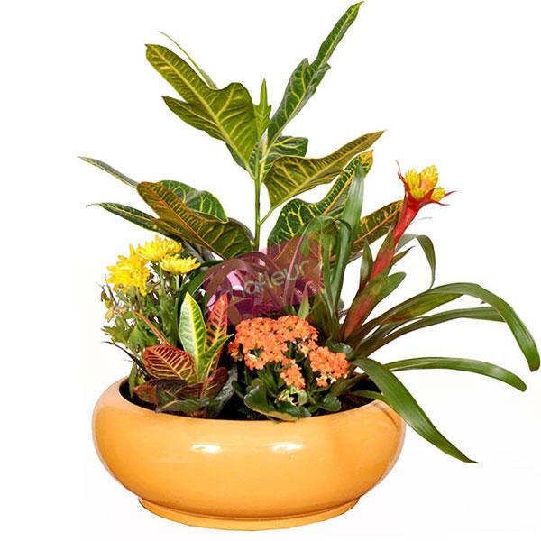 livraison de fleurs composition chaleureuse mafleur ma maroc. Black Bedroom Furniture Sets. Home Design Ideas